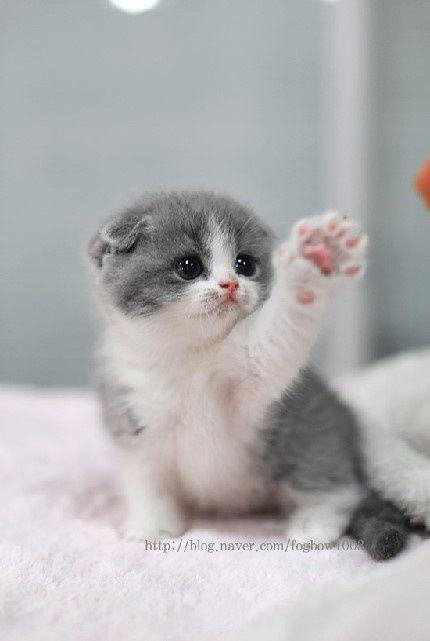 Its So Cute Im Gonna Diiiiiiiiiiiiiiiiiiie Baby Katzen