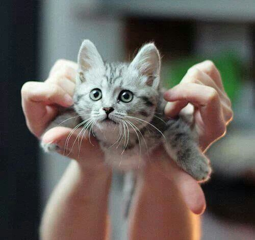 She is training to be the Super Cat!