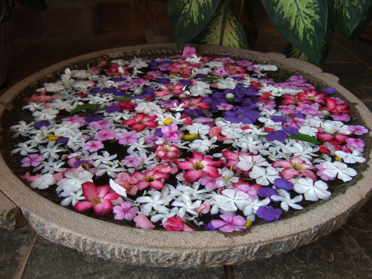 India Flower Bowl Flower Bowl Indian Flowers Floating Flowers
