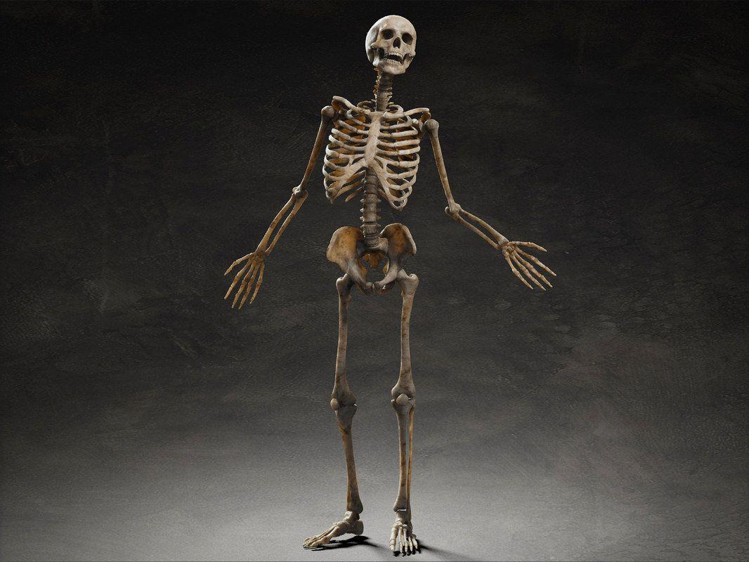 Rigging Obj Human Skeleton 3d Human Skeleton 3d Skeleton 3d Bone