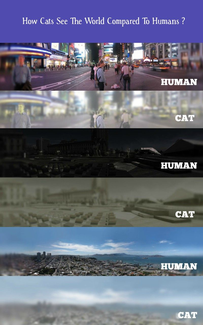 How Cats See The World Compared To Humans. ccats human