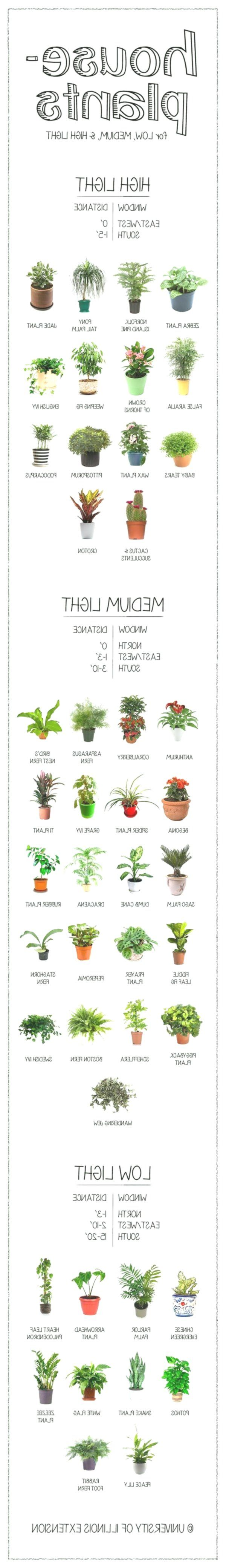 Gardening Cheat Sheets  #haircutideas #makeup #personalcelebration #diet #nutrition #quotes #genres...