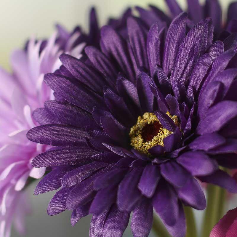 картинки фиолетовые герберы следующая статья