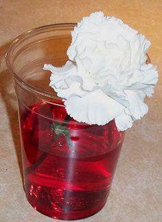 flower experiment homeschool-ideas