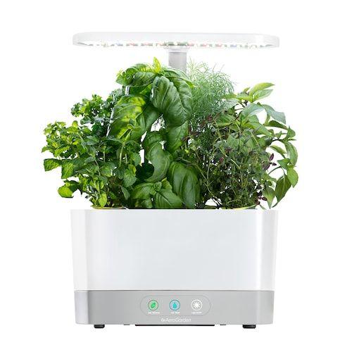 Aerogarden Harvest With Gourmet Herb Seed Pod Kit 640 x 480