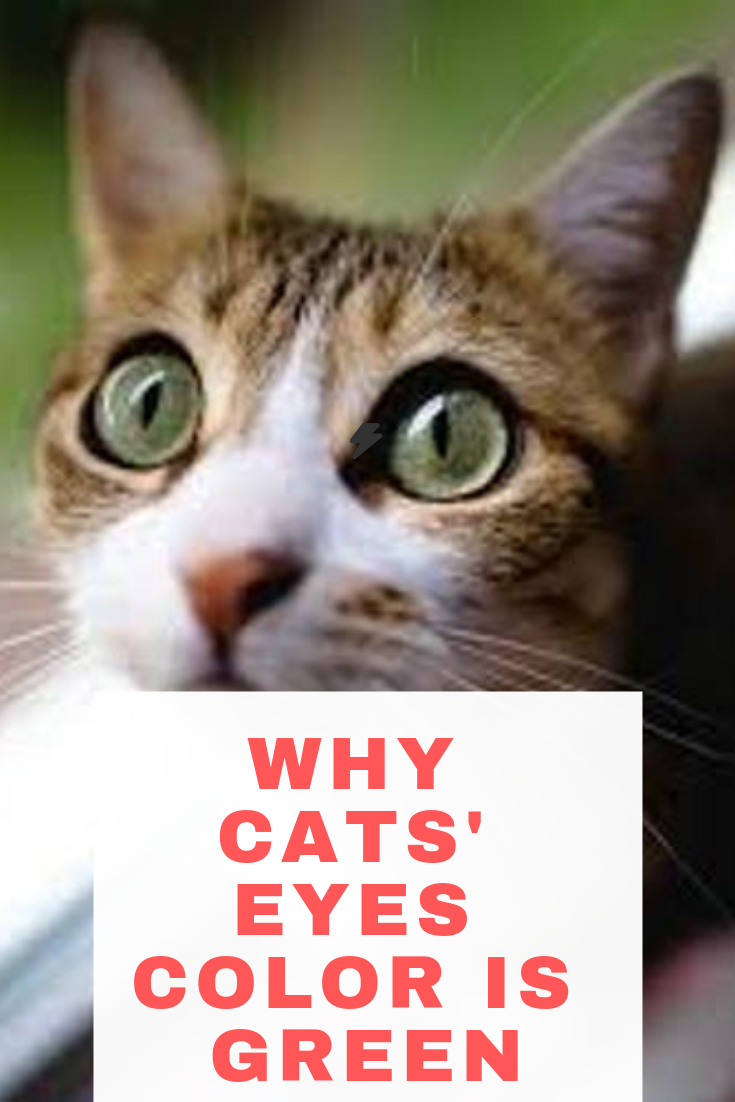 Do You Notice Cat's Eye Change Color? What Causes It (With