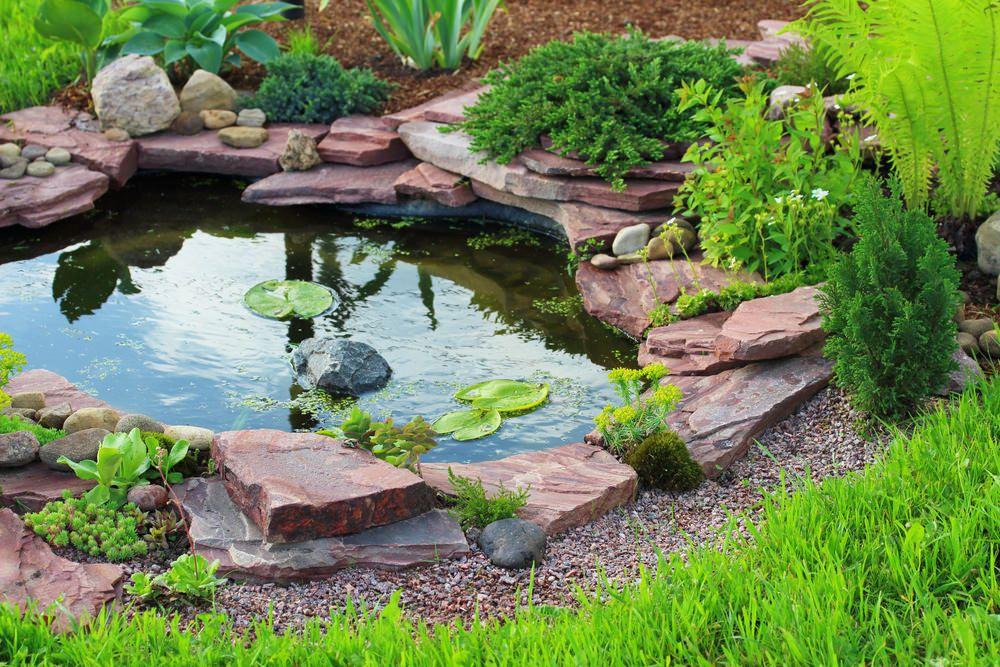 60 Backyard Pond Ideas Photos Small Backyard Ponds Ponds Backyard Pond Landscaping
