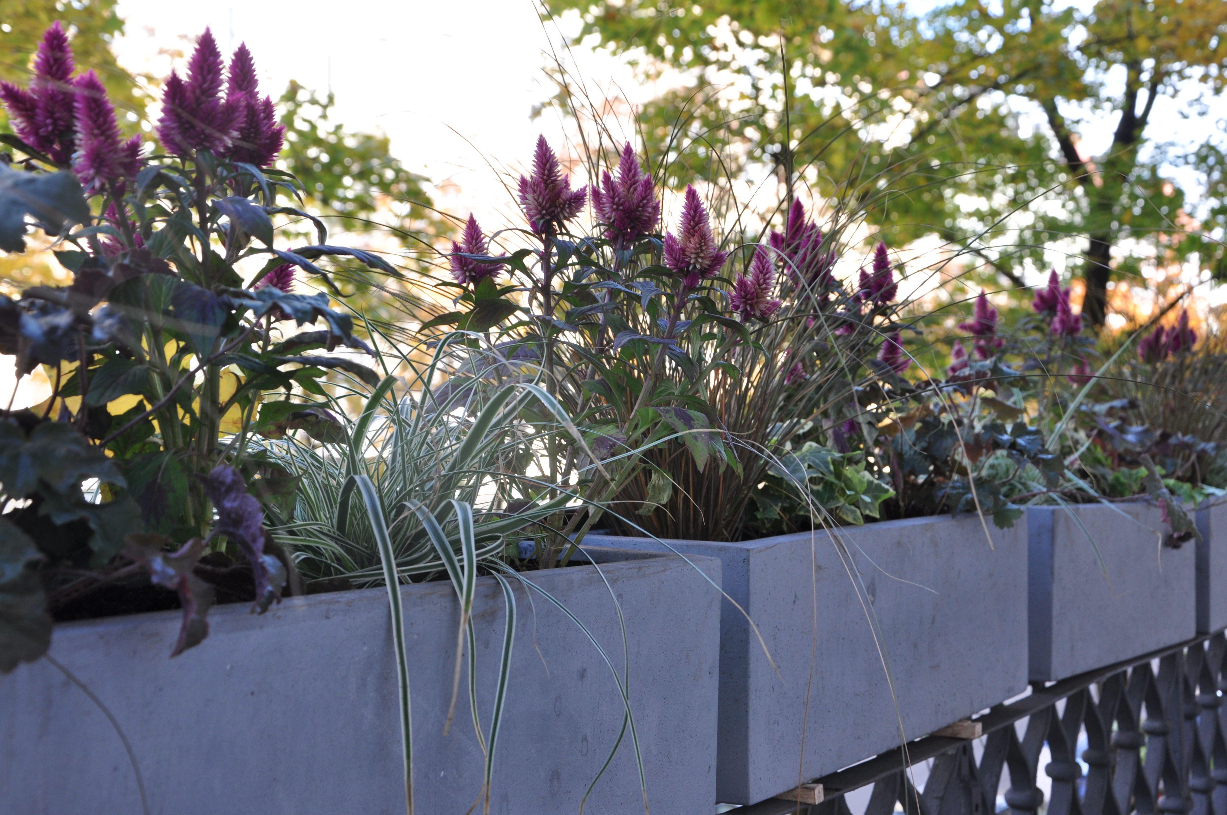 Balkonkasten Beton Mit Herbstpflanzen Balkon Pflanzen Herbstpflanzen Pflanzen