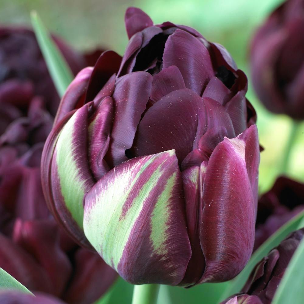 Organic Gardening Classes Near Me Organicgardeninghowtostart Id 9329037634 With Images Tulips Garden Planting Bulbs Tulips