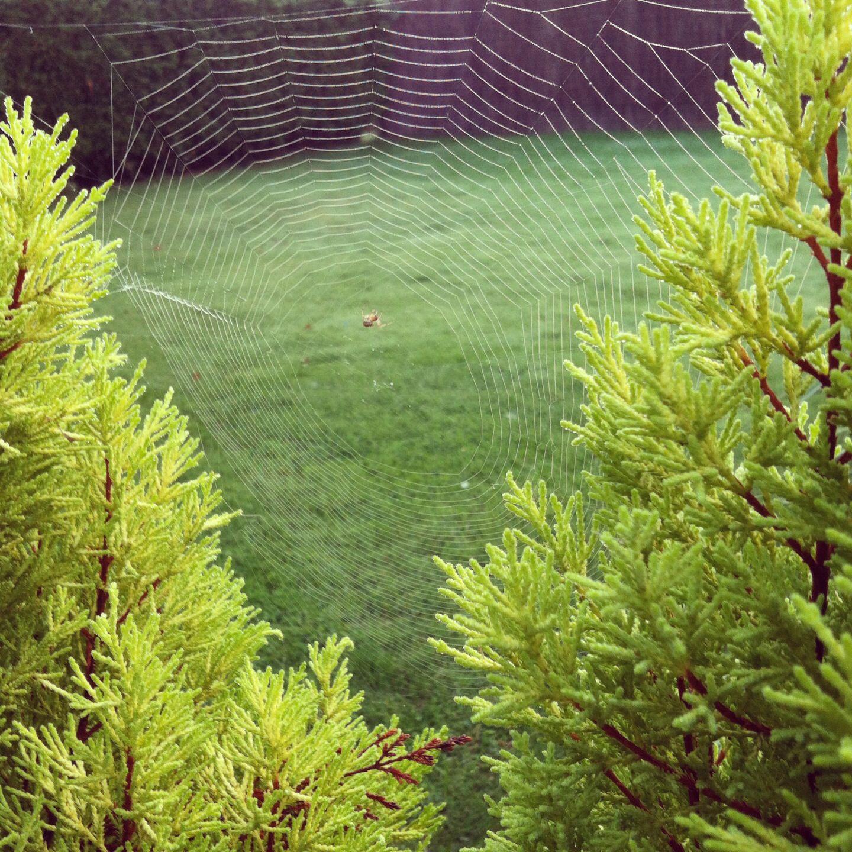 My garden & visitors :)