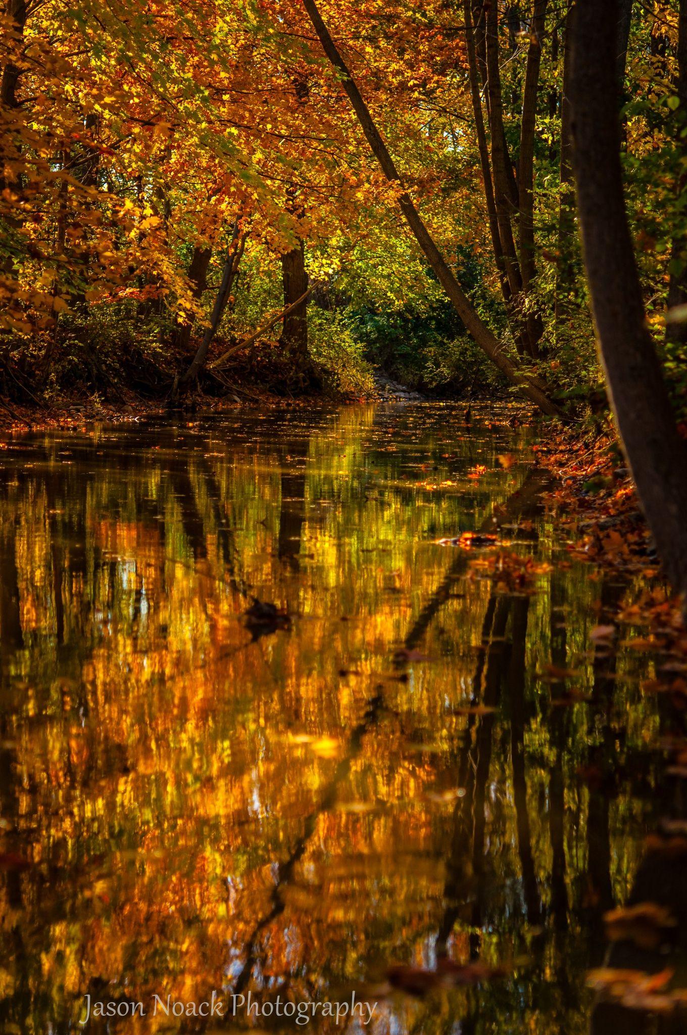 A reflection of autumn colour in the Conestogo River - St Jacobs - Ontario - Canada
