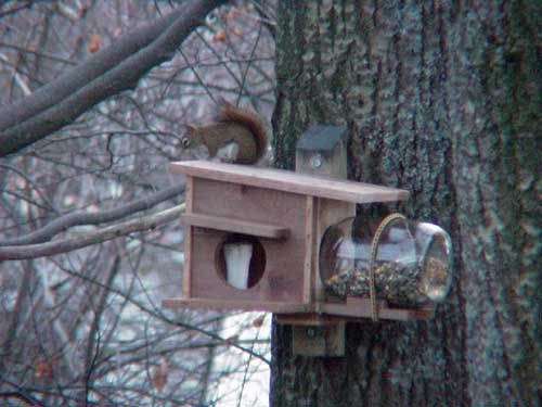 Welcome To The Red Squirrel Nest Box Nuts About