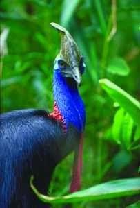 amazon rainforest plants and animals. amazon rainforest flowers animals and plants daintree