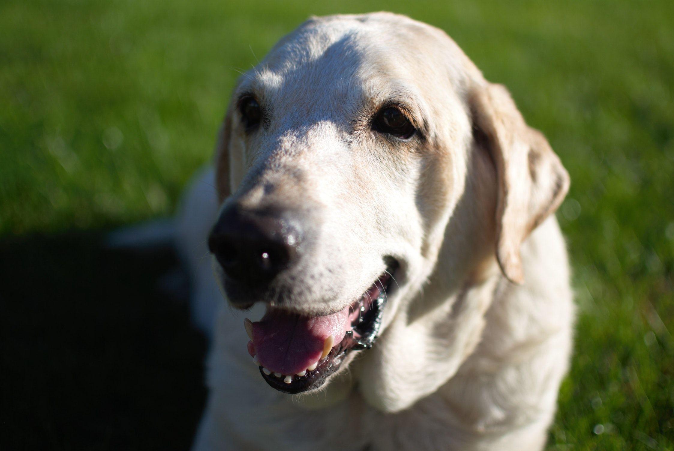 Home Senior dog, Dogs, Meds for dogs