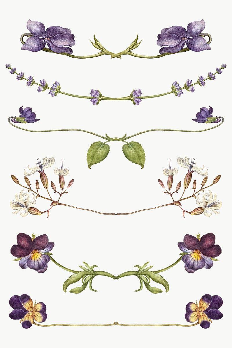 Png Flower Flourish Divider Element Set Remix From The Model Book Of Calligraphy Joris Hoefnagel And Georg Bo Flower Illustration Antique Artwork Frame Ribbon