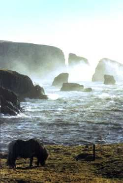 Westerwick, Shetland Islands #shetlandislands
