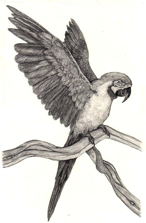 Pin By Yerlin Espinoza On Dierentekeningen Parrot Drawing Parrots Art Animal Drawings