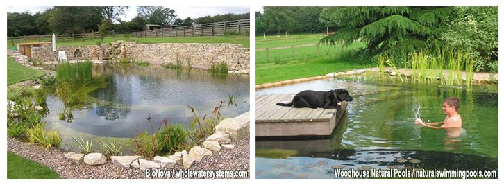 DIY Natural Pools – Build your own Swimming Pond | SPP Inground ...