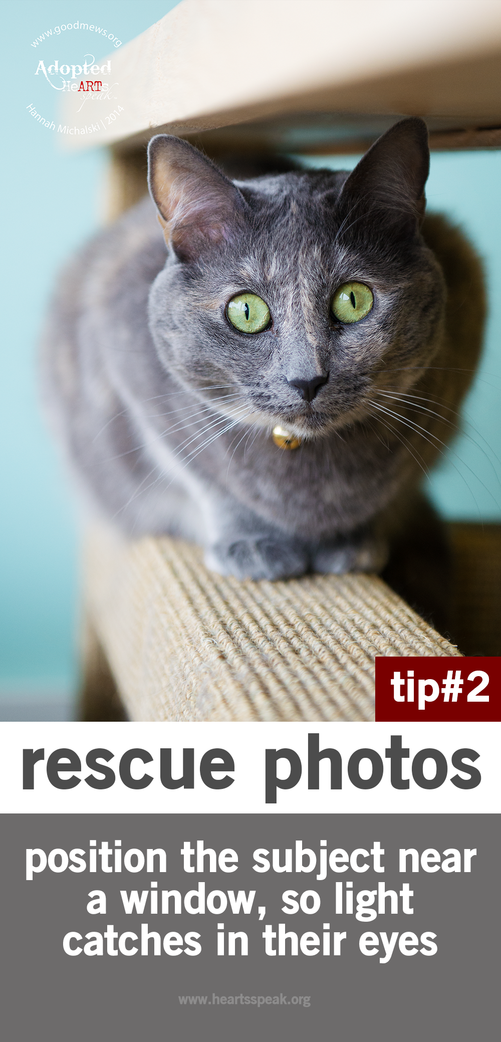 Pin On My Photography Animal Portraits 4 Rescues