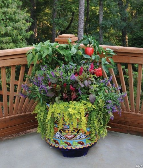 Vegetable Combination Ideas For Container Gardens