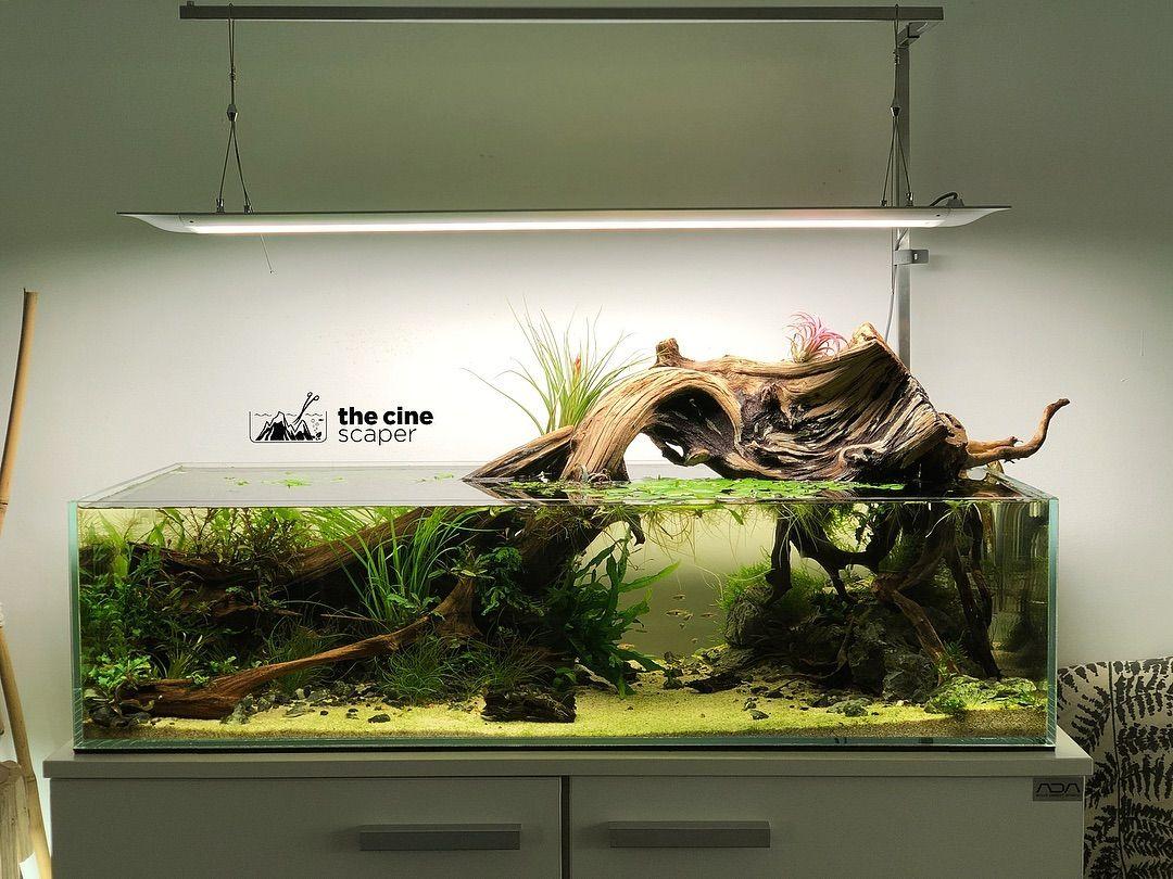 onf flat one led aquarium fish tank