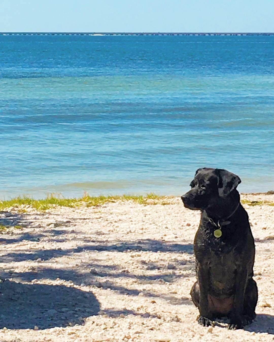 Picnic Island Dog Beach Last Weekend Dogsandpals Instadog Dogstagram Dogsofinstagram