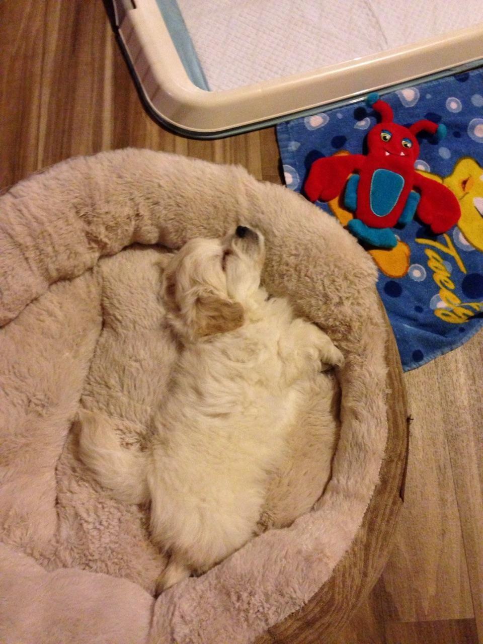 Puppy Vomiting First Night Home Ideas