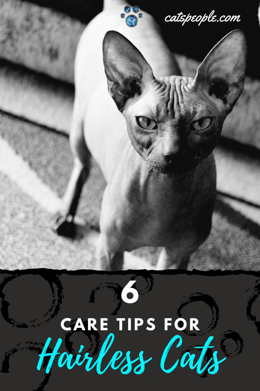 6 Sphynx Cat Care Tips in 2020 Hairless cat, Sphynx cat
