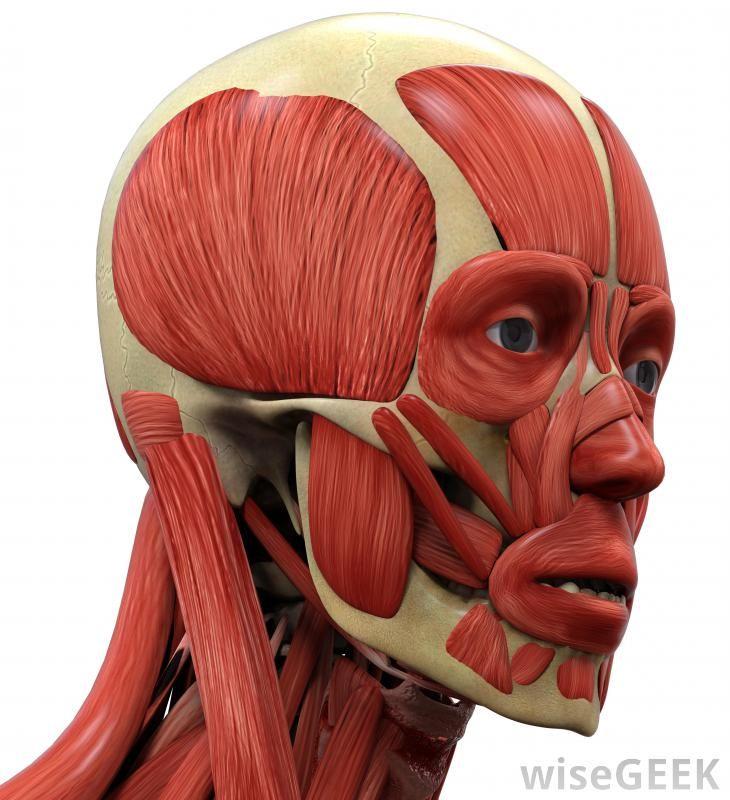 мышцы лица фото картинки квадратных