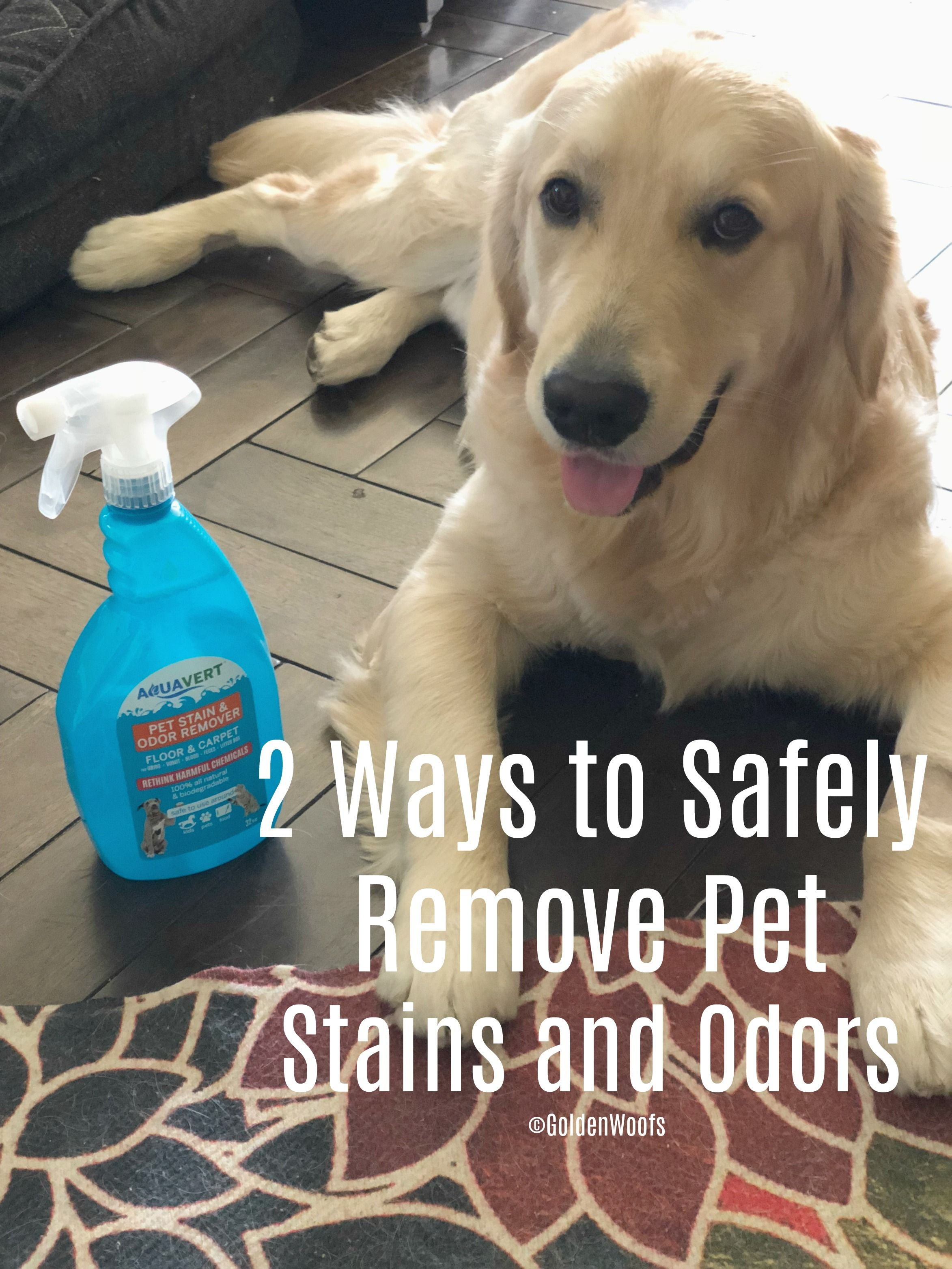 2 Ways to Safely Remove Pet Stains and Odors