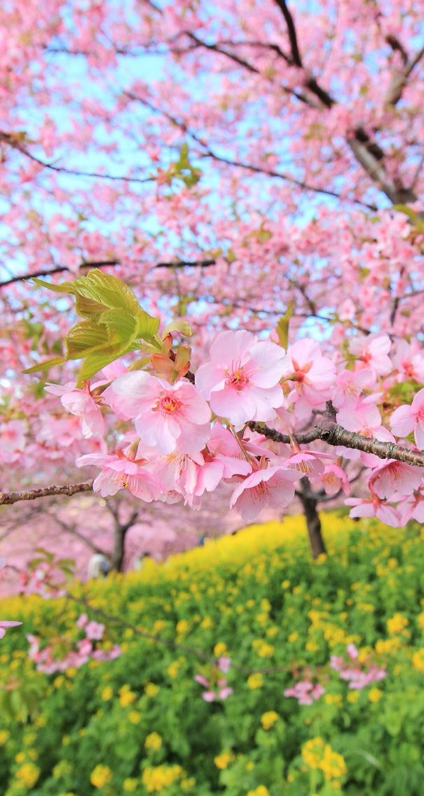 Spring wallpaper Beautiful flowers wallpapers