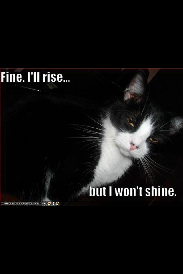 Cat humor for Catherine