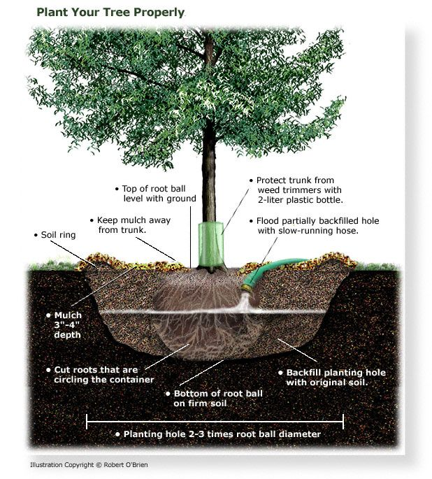 exceptional how to plant trees Part - 4: exceptional how to plant trees good ideas