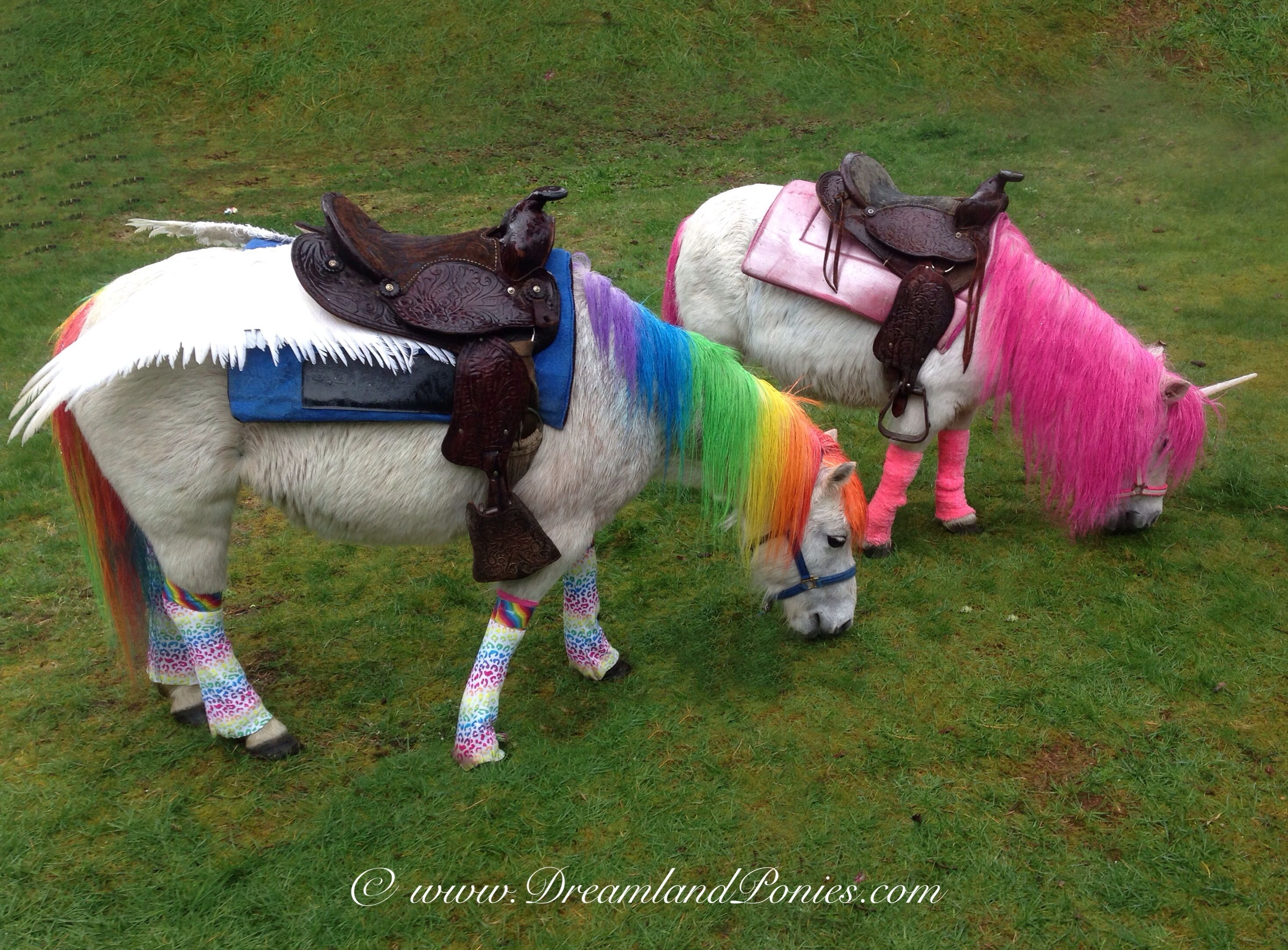 real life rainbow dash and pinky pie compliments of dreamland ponies