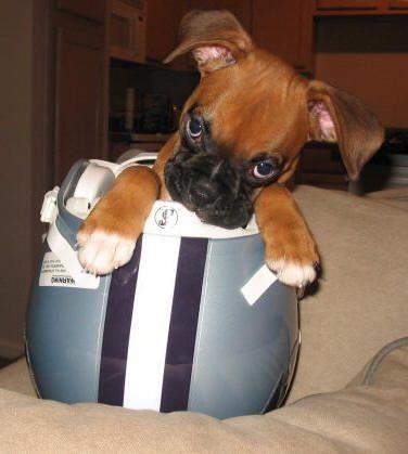 I'm a fan...of boxers.  :-)