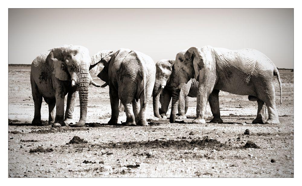 Weiße Elefanten