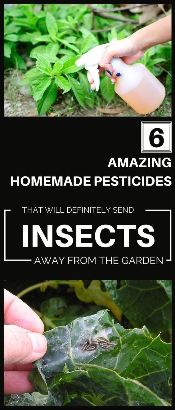 10 natural pesticides for your garden that you simply have to try!  #garden #gardenlandscaping #natural #pesticides #simply #pesticides #your