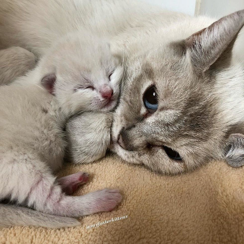 Feral Cat Mom Takes In Orphaned Kitten And Finds Comfort In Her Babies Love Meow Cat Mom Pretty Cats Baby Animals