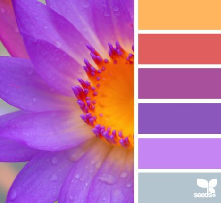Paletas de colores hoy el lila Flora