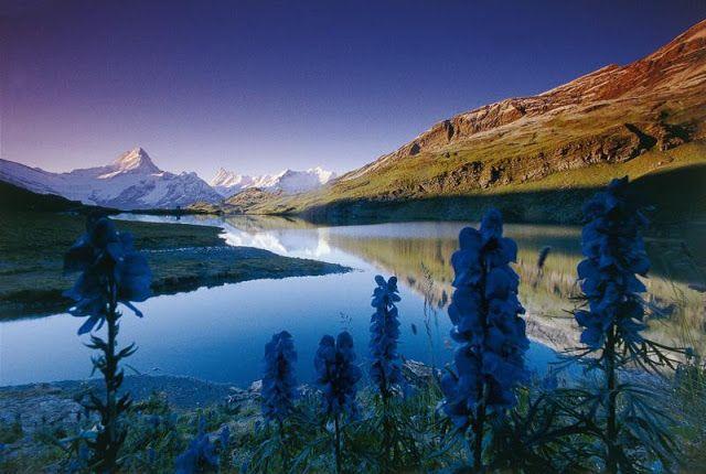 صور جميله صور جميلة Nature Photos Nature Nature Images