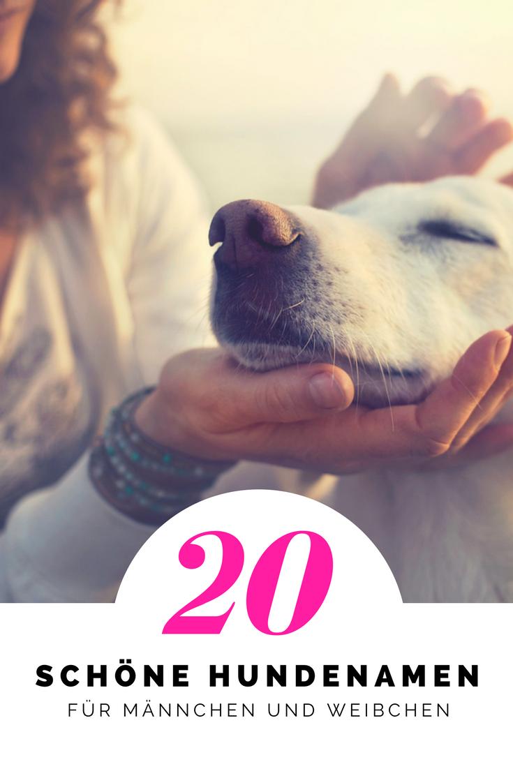 Top 20 Schone Hundenamen Das Sind Die Schonsten Namen Fur Hunde Schone Hundenamen Hundenamen Namen Fur Hunde