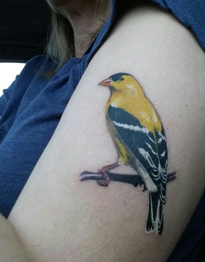 american goldfinch tattoo by becky ashcraft tattoos