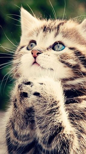 Iphone 5 Hd Wallpapers Animals 640 1136 Http Designhey Com Iphone 5 Hd Wallpapers Animals 640x1136 Cute Cats Kittens Cutest Funny Cat Memes Cute kitty hd wallpaper