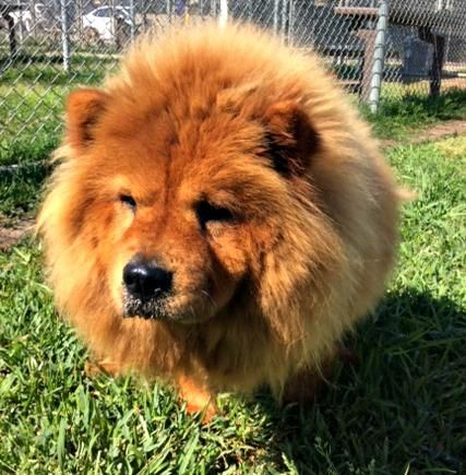 Adopt Beatrice On Hunde