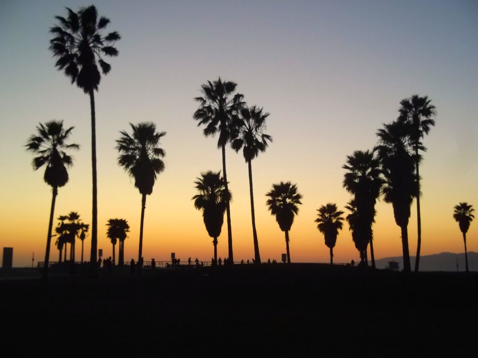 The Five Tastes In Los Angeles Los Angeles Palm Trees Los