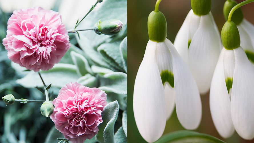 Here S Everything You Need To Know About Your Birth Flower And What It Means Birth Flowers Birth Month Flowers January Birth Flowers