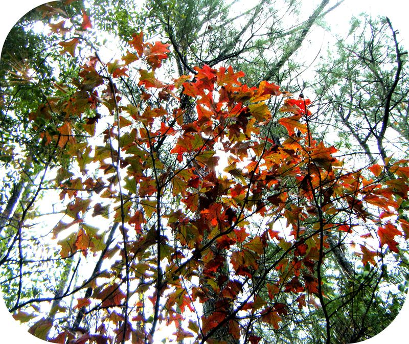 red leaves <3