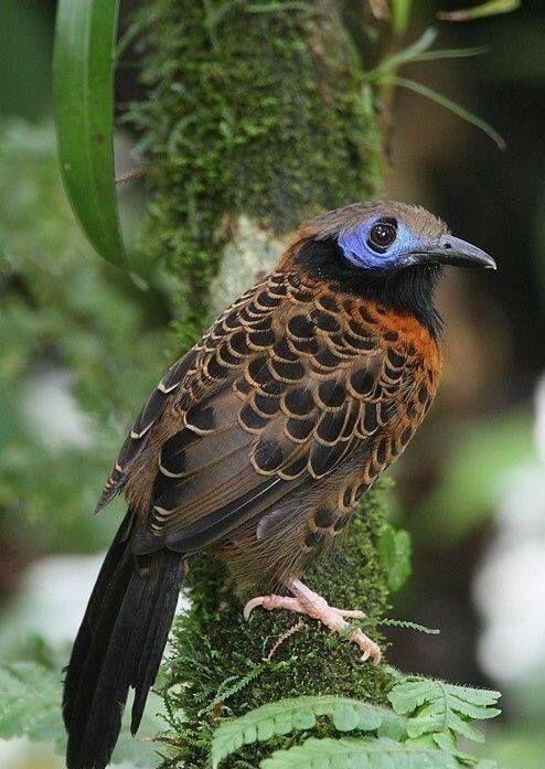 Pin De Alana Pontes Em Natureza Cores Com Imagens Aves Belas