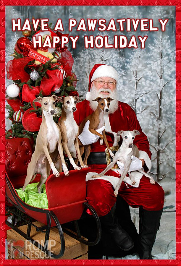 dog rescues pictures with santa | Doggy christmas card - dog holiday ...