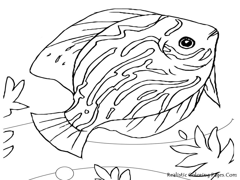 Ocean Animals Coloring Pages | Sea Life Coloring Pages Presented By  Realistic Coloring Pages To Every .